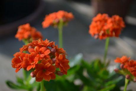 Botanická záhrada pri SPU v Nitre